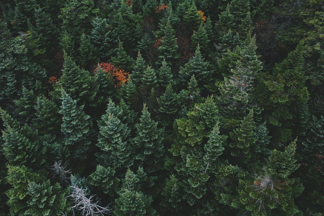 Den nordliga skogens ekologi och bevarande
